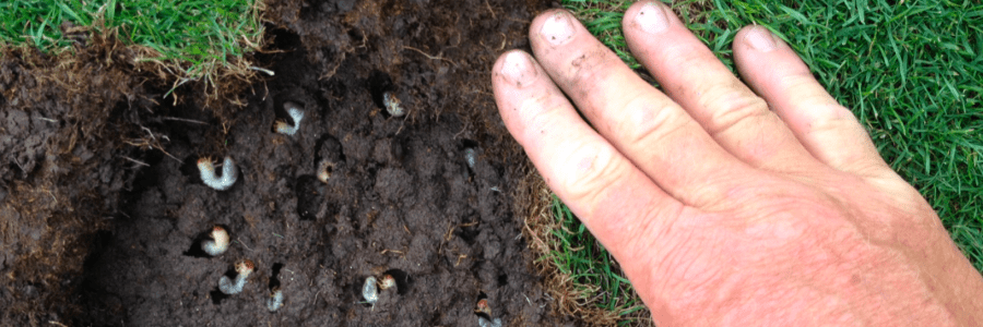 Acelepryn Syngenta Pest Tracker