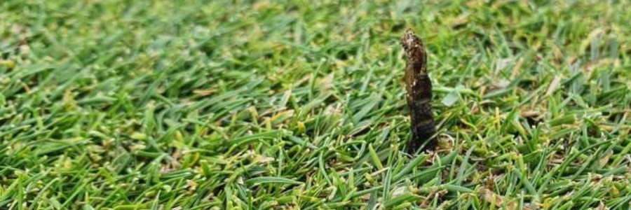 Cranefly Hatch Golf Course