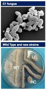 Dyadic C1 microorganism