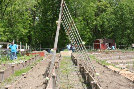 Hmmm, what can we do with this giant trellis?