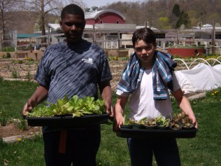 Greg and Harrison bring flats of lettuces and other cool-weather crops to harden off in the garden.
