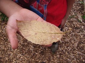 Adonis admires the water droplets on this leaf.