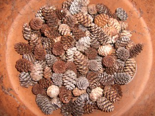 Pinecones that I collected from Maine this summer, while on vacation. Thanks, Cathy!