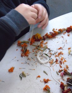 Alex is helping to string marigold flower heads to be used as a garland for our Halloween tree.