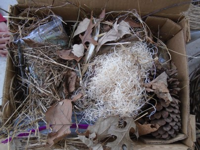 Nesting materials we collected and some scraps we had on hand.