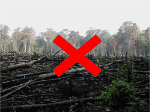 Reducing Emission from Deforestation and Forest Dedradation
