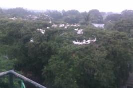 Birds at Telineelapuram Andhra Pradesh