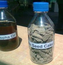 Biofuel made from Jatropha