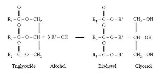 Schematic representation of the transesterification reaction