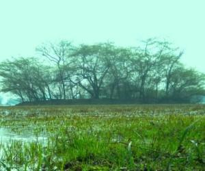 Water swamp at Sultanpur Bird Sanctuary