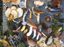 Fungi of Saskatchewan - Biodiversity