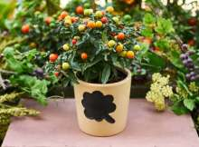 Grow vegetables in a pot
