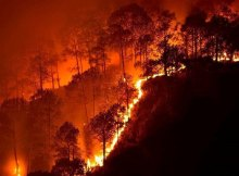 Bandipur-forest-fire