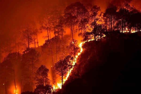 In February 2019, massive forest fires broke out in numerous places across the Bandipur National Park of the Karnataka state in India