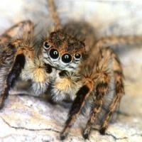 Spider Feet