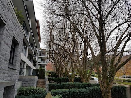 trees buildings 3