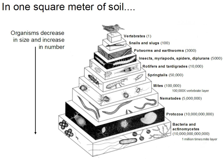 Life Soil Worksheet