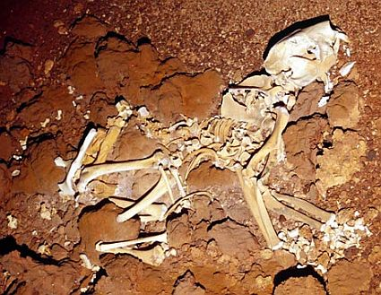 070124 iceage fossils big 45