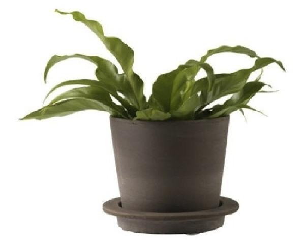 4 ikea potted plants