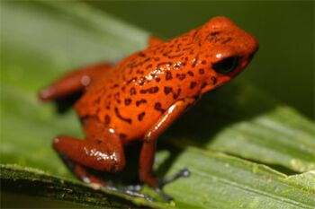 amphibians are endangered