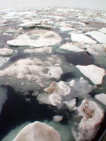 arctic sea level falling