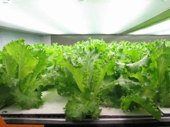 chefs farm3