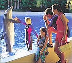 dolphins2 1822
