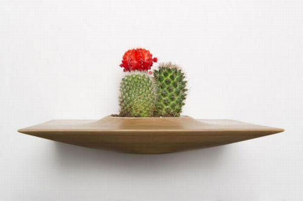 Domenic Fiorello's Plant Pods 1