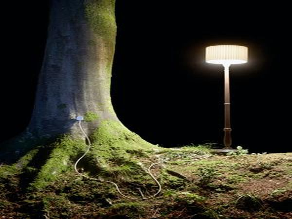 Energy from trees to power sensors