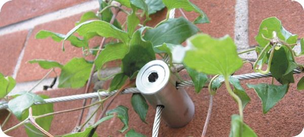 Evapotranspiration for cooling your walls