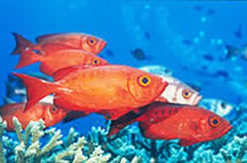 exotic line of fish at great barrier reef2 9