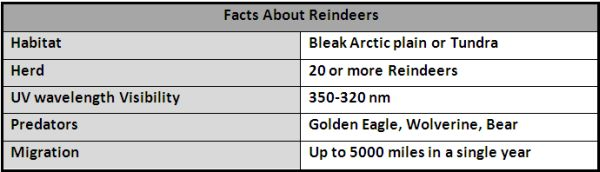 Facts About Reindeers