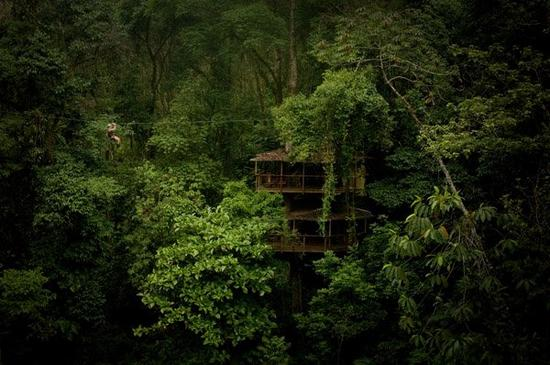 finca bellavista first energy efficient tree house