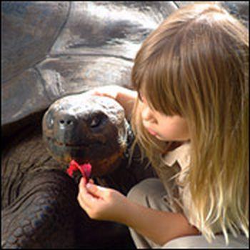 giant galaacutepagos land tortoise 9