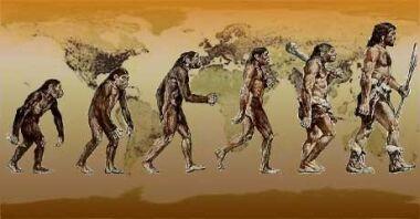 humans evolution