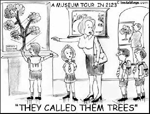 if the trees disappeathen