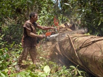 illegal logging 9