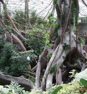 indonesian jungle