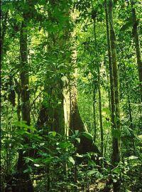 indonesian rainforests