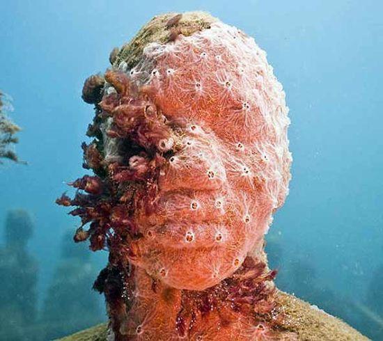 moiliniere bay underwater museum 1