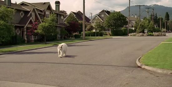 nissan polar bear ad 1