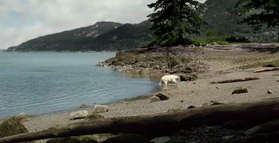 nissan polar bear ad 3