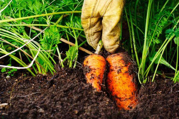 Organic or natural fertilizer