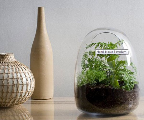 Ornamental Glass Terrarium