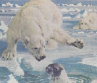 polar bear hunting a seal 9