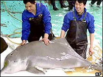 rare asian dolphins in danger