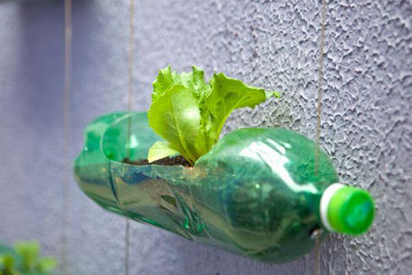 Recycled Plastic Bottle Gardening