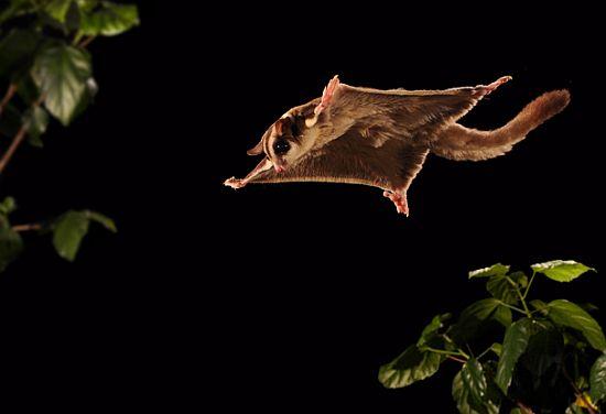 scott linstead captures wild creatures in motion 7