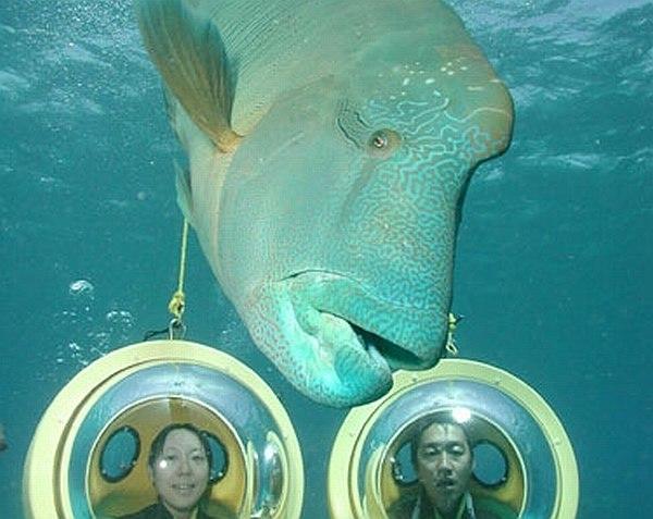 Scuba-Doo Underwater Motorcycle