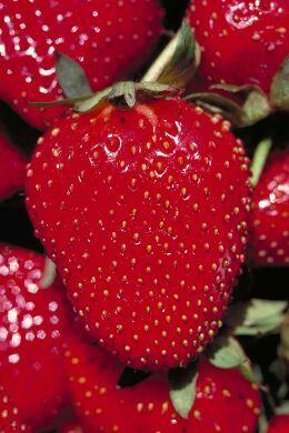 strawberry6